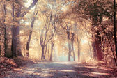 Autunno dorato, paesaggio — Foto Stock