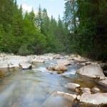 Carpathian mountain river — Stock Photo #11814102