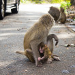 图库照片: Monkeys in the city in danger