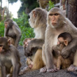 Monkeys in jungle on the mountain — Stok fotoğraf