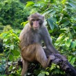 Monkey on tropical tree in jungle — 图库照片