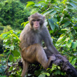 Monkey on tropical tree in jungle — Stock Photo