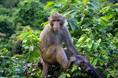 Monkey on tropical tree in jungle — Stockfoto