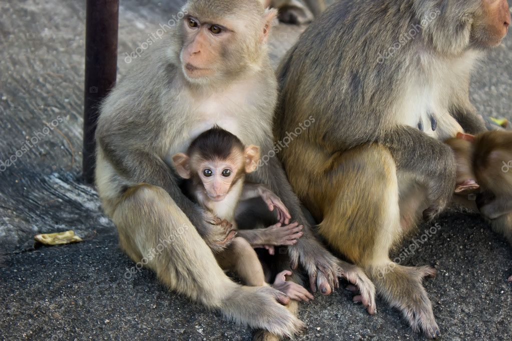 Monkey family with the little baby on the rock — Stock Photo #11802088