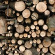 Fire Wood — Stock Photo #10825336