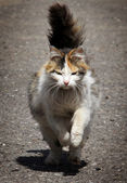 A lady-cat — Stock Photo