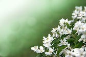Flowers on a green background — Stock Photo