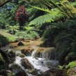 Stock Photo: Creek in tropical landscape (Sao Miguel, Azores) 02