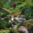 Creek in tropical landscape (Sao Miguel, Azores) — Stock Photo
