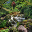 Stock Photo: Creek in tropical landscape (Sao Miguel, Azores)