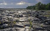 Lava field at Big Island (Hawaii) — Stock Photo