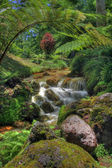 Creek in tropische landschaft (sao miguel, azoren) — Stockfoto
