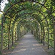 Garden-Way, coverd by tendrils — Stock Photo