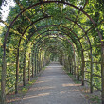Garden-Way, coverd by tendrils — Stock Photo