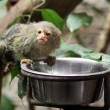 Cute little monkey while feeding — Stock Photo