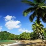 Beach of the Englishman Bay (Tobago) 2 — Stock Photo