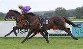 Jockeyless horse during a race — Stock Photo
