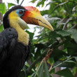 Hornbill bird — Stock Photo