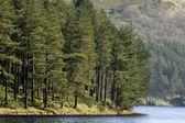 Trees next to a lake — Stock Photo