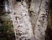 Drzewo wspomnienia młodości — Zdjęcie stockowe