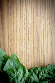 Green Spinach Leaf — Stock Photo