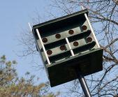 Casa enorme pássaro — Foto Stock