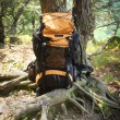 Summer Backpacking — Stock Photo