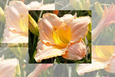 Se desvaneció flor fondo — Foto de Stock