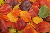 Feuilles d'automne chute — Photo