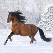 Stock Photo: Beautiful horse in the winter