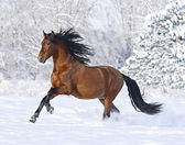 Beautiful horse in the winter — Stock Photo