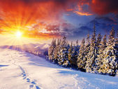 Winter sunset — Stock Photo