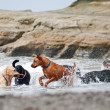 A group of dogs playing in the ocean - Stock Photo