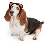 Basset Hound Dog Wearing Cat Ears — Stock Photo