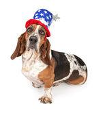 Basset Hound Dog Wearing Independence Day Hat — Stock Photo