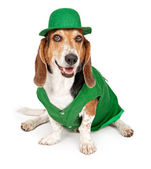 Basset Hound Dog Wearing St Patricks Day Outfit — Stock Photo