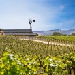 Vineyard with young vines — Stock Photo