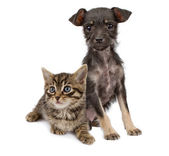 Puppy and kitten sitting together — Stock Photo