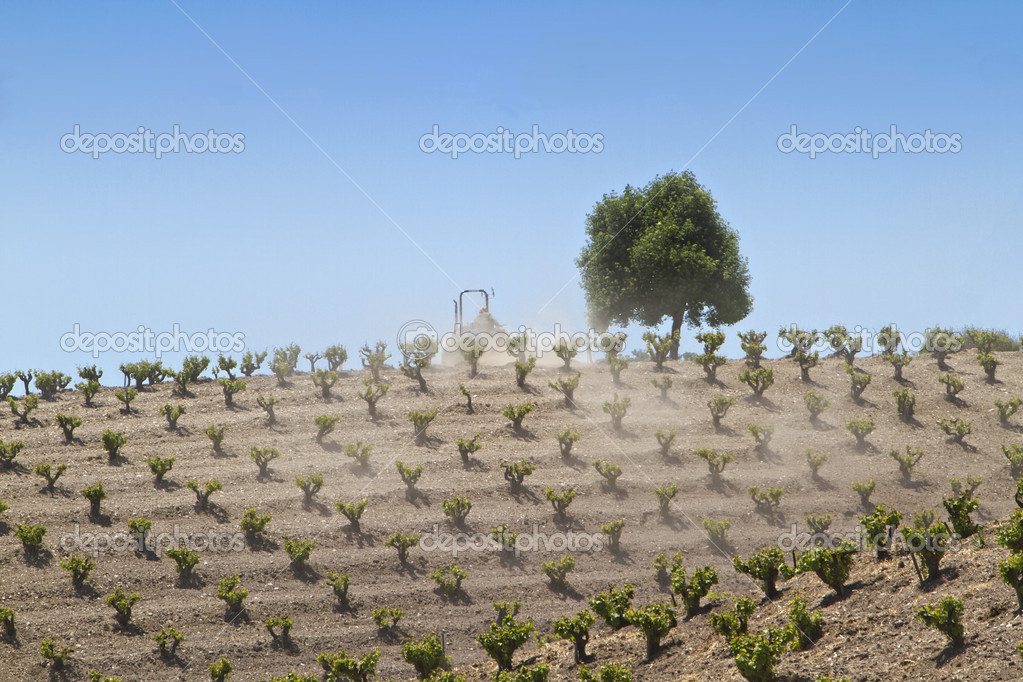 Young grape vines on a northern California wine country wine vineyard being farmed by a man riding a tractor  Stock Photo #10970850