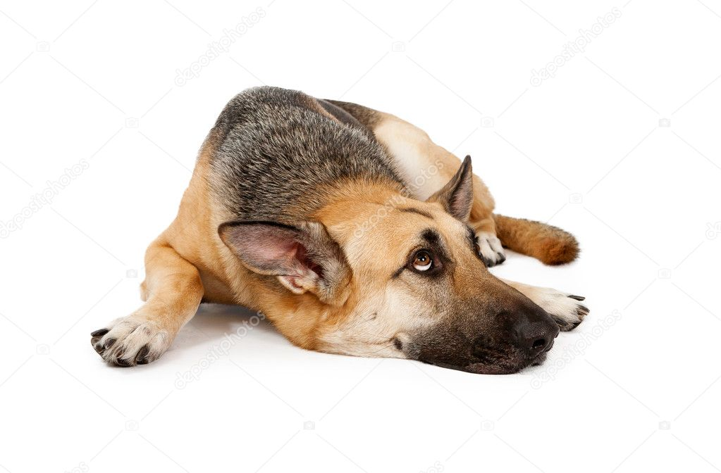 How To Draw Dog Laying Down