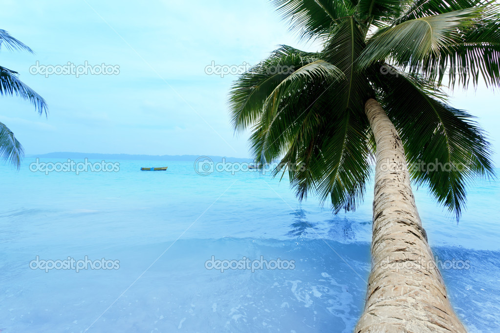 Picturesque landscape of tranquil island beach with palms. — Stock Photo #10768529