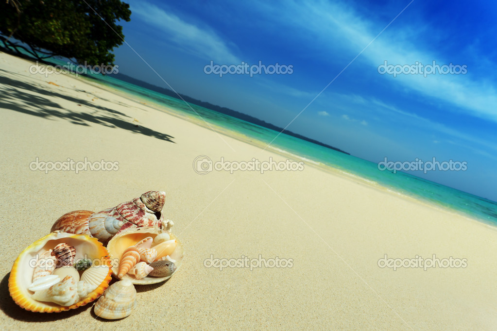 Seashells lying on a sand over beautiful seascape. Vacation. — Stock Photo #10768815