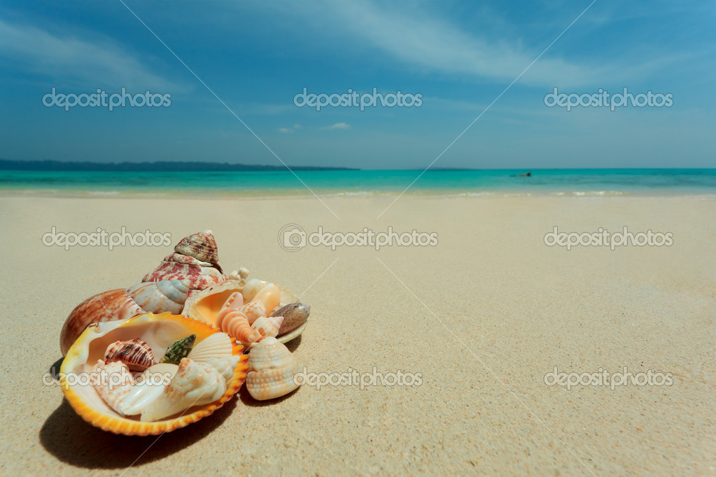 Seashells lying on a sand over beautiful seascape. Vacation. — Stock Photo #10768824