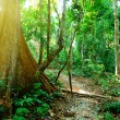 Wild jungles - 