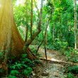 Wild jungles - Stock Photo