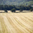 Stock Photo: Crops in field