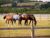 Purebred Horse — Stock Photo