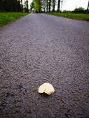 Country lane the baddesley clinton estate warwickshire midlands england uk — Stock Photo