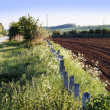 Stockfoto: Crops countryside