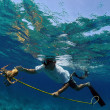 Stock Photo: Mspearfishing for lobster in Bahamas